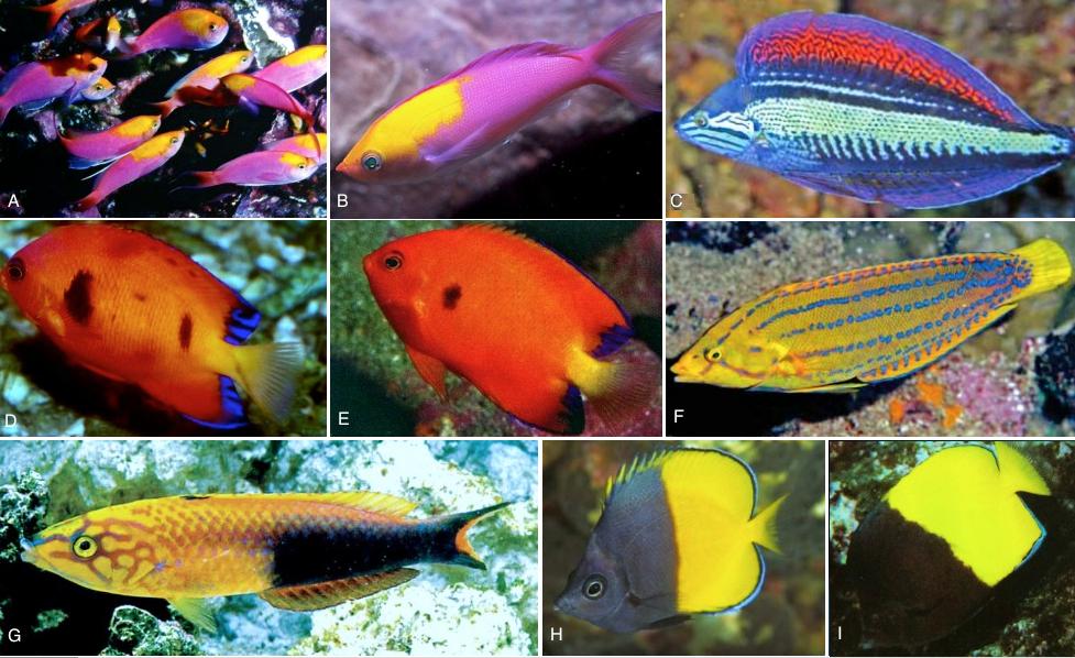 Fauna de la polinesia for Variedad de peces