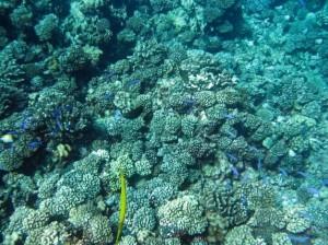 manihi fondo marino
