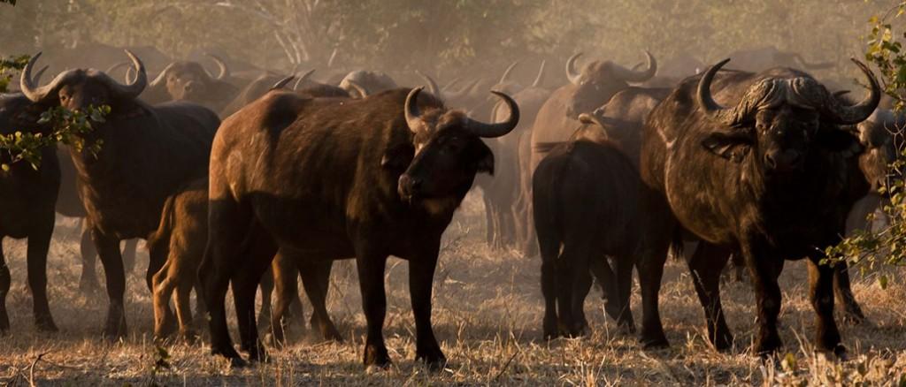 Moremi Safari (9)
