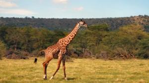 Recorriendo-el-norte-de-Botswana
