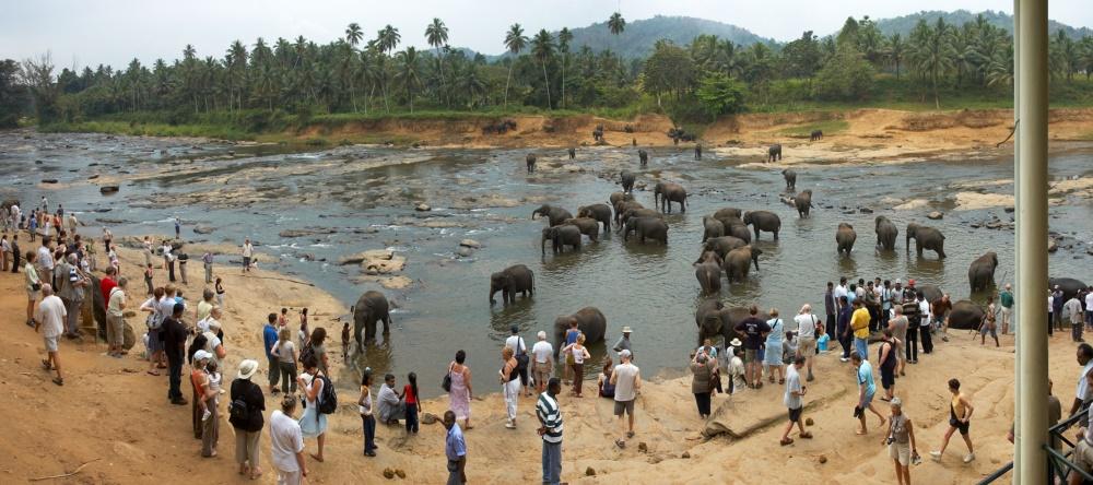 Elephants_in_water2