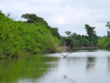 Ceibal- Una de las Ultimas Ciudades del Período Clásico