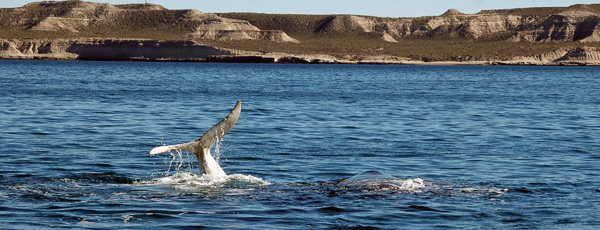 ballenas patagonia